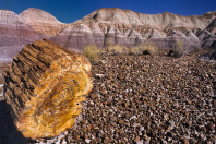 © MWW - Petrified Forest N.P.